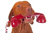 16697751-dog-holding-red-phone-receiver